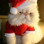 Babbo Natale Gatto