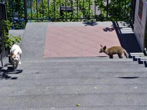 Il Gatto e la Volpe - The Fox and the Cat